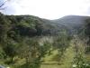 知名瀬のタンカン畑