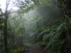 霧の中、大川源流あたり