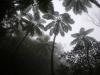 霧のヒカゲヘゴ
