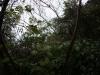 (3/6)ビロードボタンヅルの種子