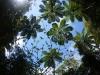(4/4)イヌビワの新芽とヒカゲヘゴ