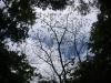 (4/4)ハゼノキの新芽