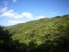 (4/4)知名瀬林道から新緑の森