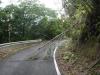 (5/12)台風一過後の林道