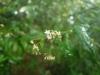 (5/31)シシアクチの花