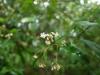 (6/1)シシアクチの花