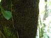 (8/31)ヒカゲヘゴの根