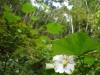 (11/8)森のギャップの植生
