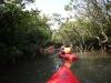 (3/18)マングローブの狭い水路を行く