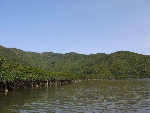 新緑のマングローブ周辺の山々
