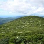 湯湾岳山頂