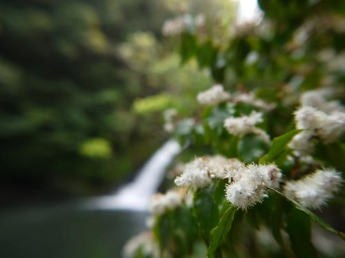 マテリヤの滝とアマシバ
