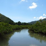 マングローブの水路