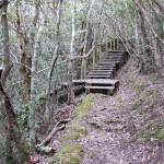 湯湾岳の登山道