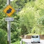 奄美市住用町から網野子峠へ登る途中「アマミノクロウサギ飛び出し注意」の標識。