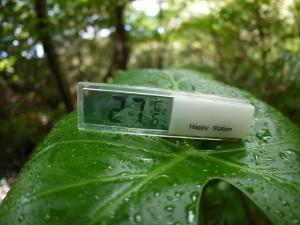 金作原原生林の気温