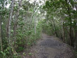 南風に煽られる木々