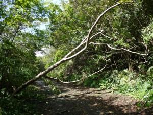 南部の林道
