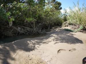 水路入り口に堆積した土砂と倒木