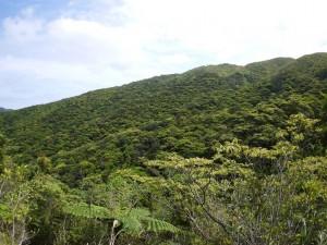 新緑に覆われた森