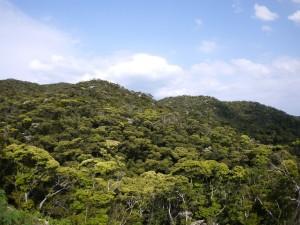 新緑の森(加計呂麻島)