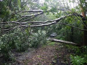 倒木に塞がれた林道