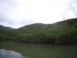 マングローブ河口の山は新緑