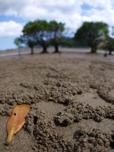マングローブの干潟