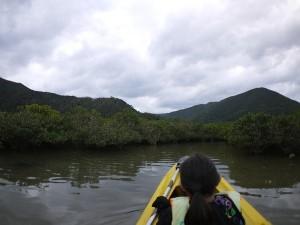 冬のマングローブカヌー