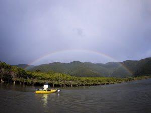 マングローブに虹