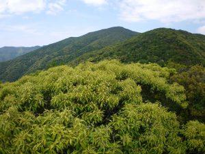 新緑の湯湾岳