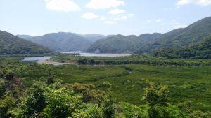 マングローブ全景