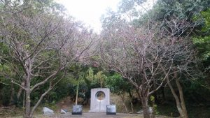 島尾敏雄文学碑のヒカンザクラ