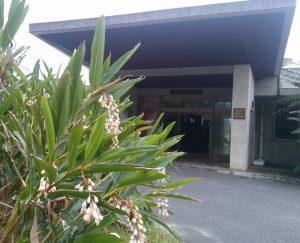 タラソ奄美の竜宮 玄関前のゲットウ (月桃・サネンバナ)