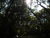 逆光のマングローブ水路