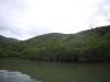 (3/16)マングローブそばの森は新緑