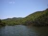 (3/18)住用川河口の山の新緑